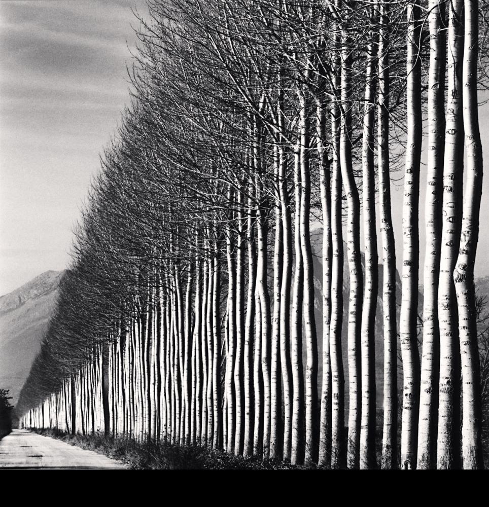 Una foto en blanco y negro de una avenida de álamos en Italia por Michael Kenna