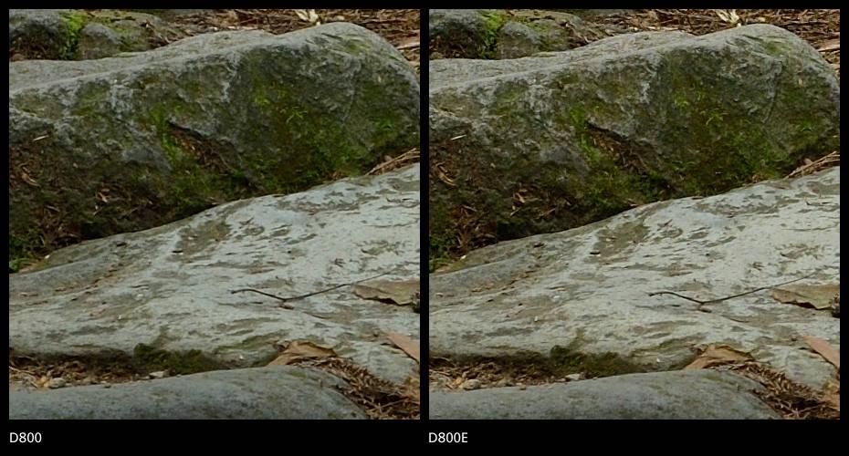 Nikon D800 vs D800E Nitidez