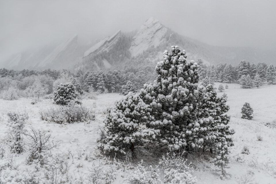 Aunque esta es una fotografía en color, parece monocromática debido a toda la nieve.
