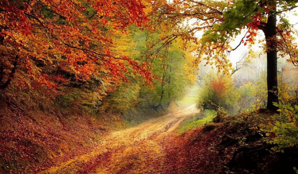 Una foto de un camino forestal otoñal