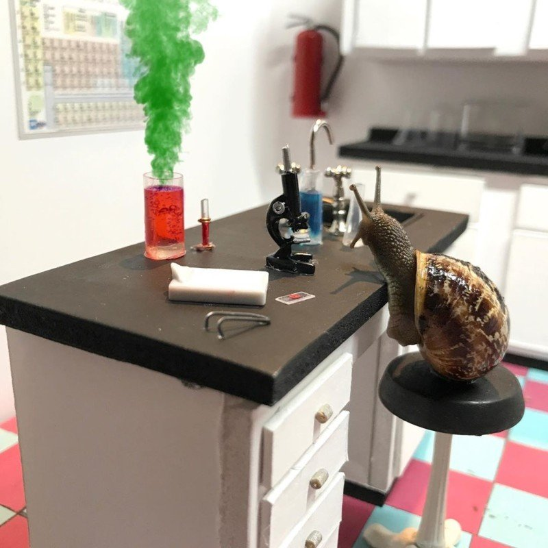 El dúo artístico crea intrincados mundos en miniatura para fotos de caracoles creativos