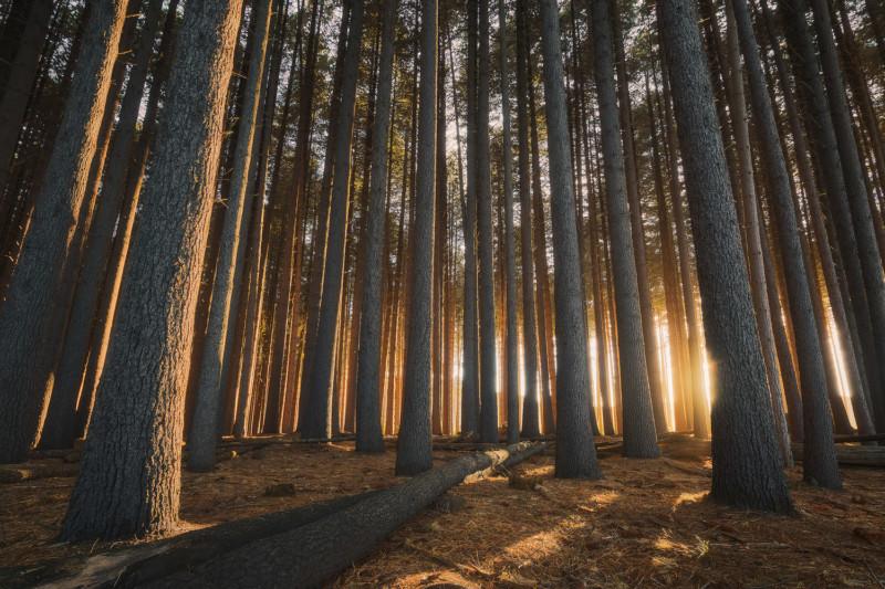 Por qué los preajustes no funcionan para la fotografía de paisajes