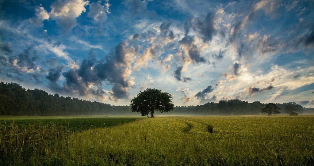 Una imagen de fotograma completo de un árbol en un campo