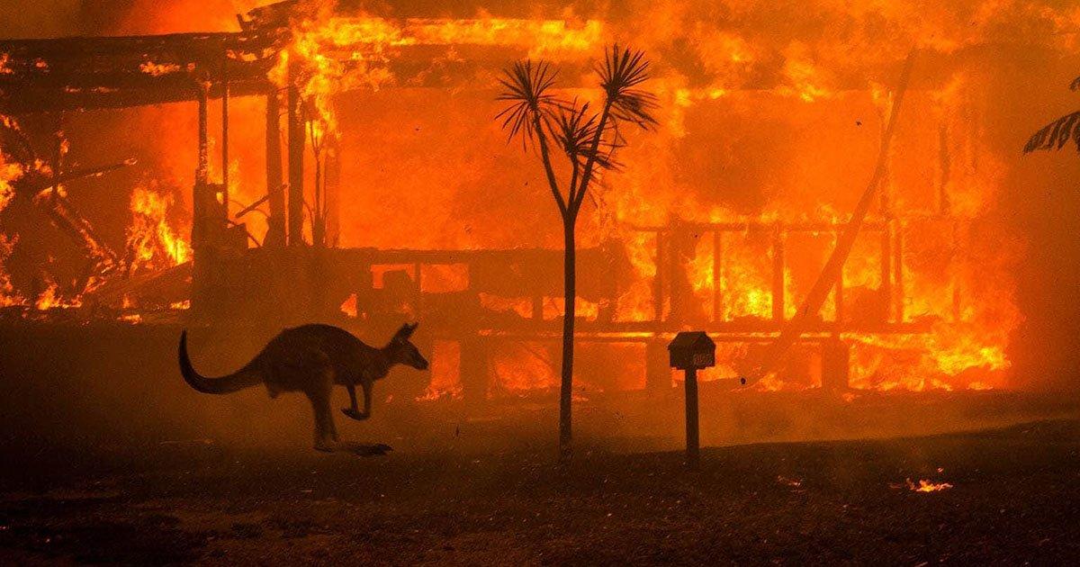 Esta es la imagen más icónica de los incendios forestales australianos