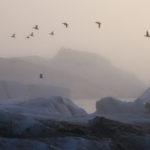 Guía completa de fotografía de invierno
