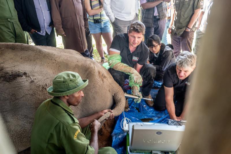 Documentando el destino del Rinoceronte Blanco del Norte