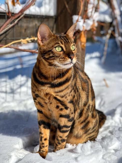 Foto del gato del iPhone y Bokeh simulado
