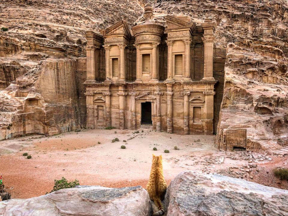 Imagen de un gato mirando al monasterio de Petra, Jordania