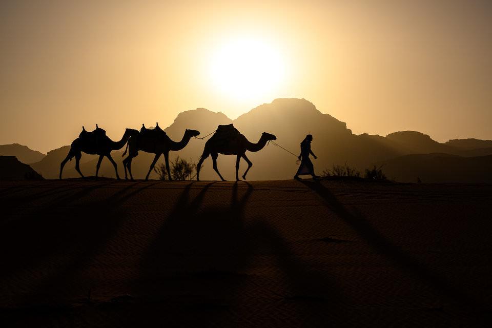 Camellos en el desierto de Wadi Rum, Jordania