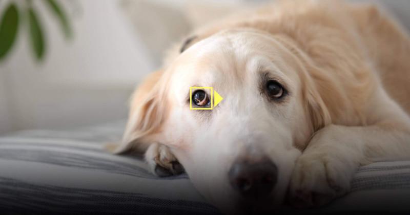 Nikon añade el Animal Eye AF a los Z6 y Z7 con una importante actualización del firmware