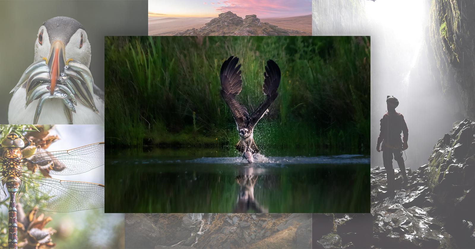 El segundo disparo de un águila pescadora gana el concurso de fotografía de los parques nacionales